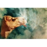 Tytoniowe